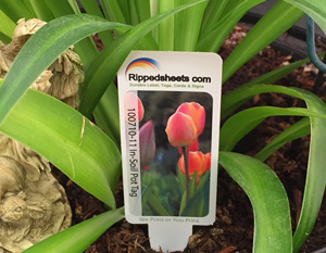 In Soil Pot Tag and Plant Stake